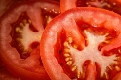 The Tomato Fruit
