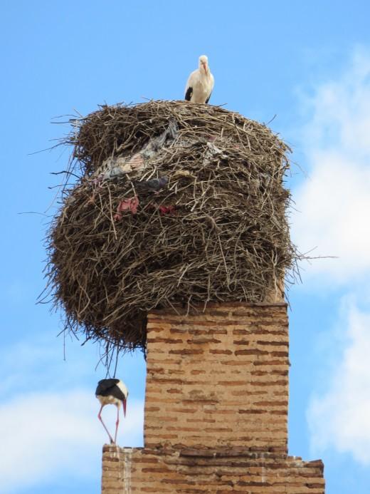 El Badii Palace nesting Storks