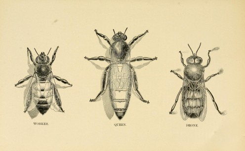 5 Little-Known Bee Facts
