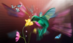 Hummingbird on Hybiscus Flower: a Poem