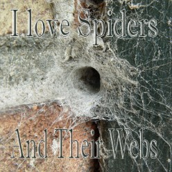 I Love Spiders and Their Webs
