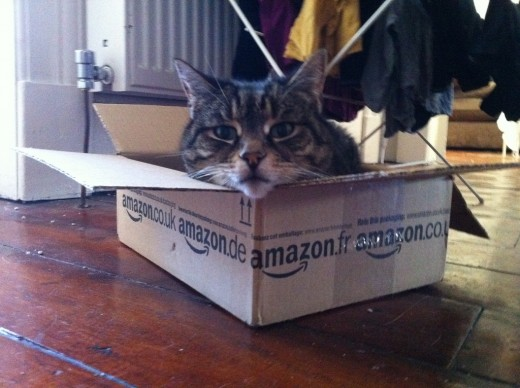 A purr-fect delivery service.