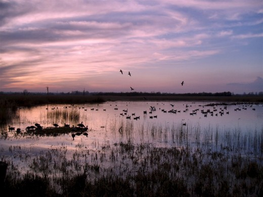 Fenland winter - think of groaning winds, thick mists, gnawing cold and having to live under canvas, much of the time inactive