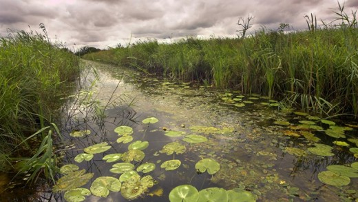 Sutton Fen: waterways are deceptive. They might not look deep, but tread warily! Beneath the calm water may be deep black peat or mud that the unwary may fall foul of. If you fall in your chances of rescue are slim! These parts are sparsely populated