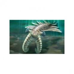 Giant Cannibal Shrimp - YIKES!