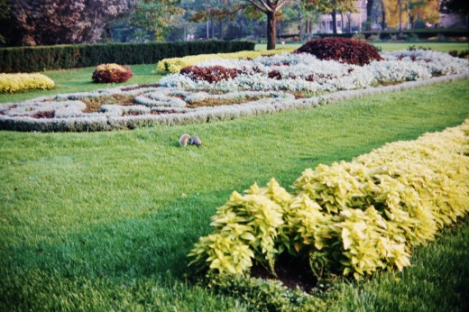Landscaping in Mitchell Park