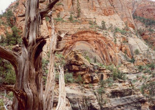 Canyon Overlook Trail in Zion