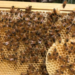 Why I Became a Beekeeper