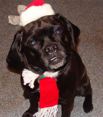 Entertaining dog at Christmas Time