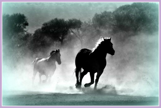 You won't see horses running wild unless you find out where they are and go to see them!