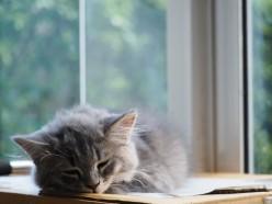 Life with Sleep Apnea: My Story
