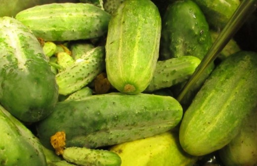 A Few Days of Rain and Warm Weather will Produce Many Suitable Cucumbers