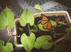 The Butterfly Effect - Childhood Traditions and Lessons