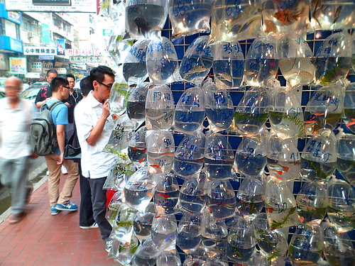 Browsing customers at Goldfish Market.