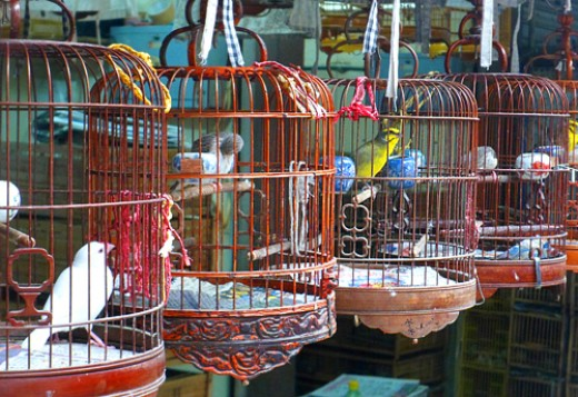 Exquisite bamboo cages and birds for sale.