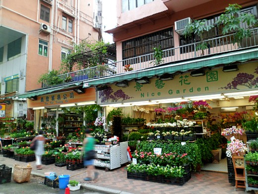 Gardening shops and plant nurseries.