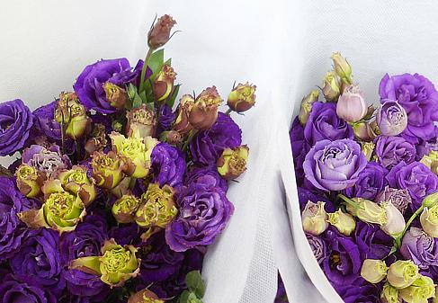 Gorgeous lavender roses!
