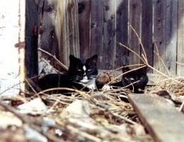 Although miracles can happen, any completely wild cat over the age of five will not be able to adapt to living indoors.