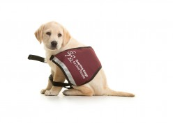Hearing Dogs for the Deaf : Man's Best Friend Helps Again