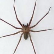 SpiderBytes profile image