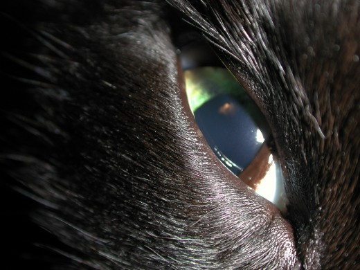 Have you noticed your pet's third eyelid?