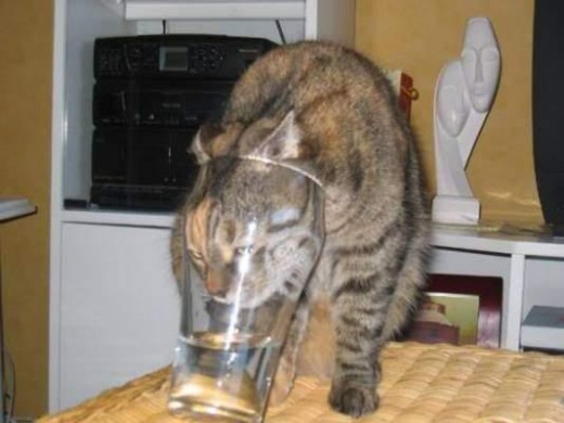 Do you find you are as thirsty as this cat?