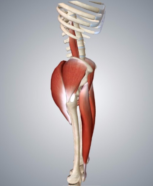 Glutes juxtaposed with hip flexors.