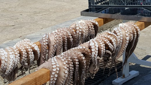Naoussa Octopus Drying in Sun