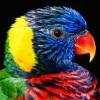 RossieUranga profile image