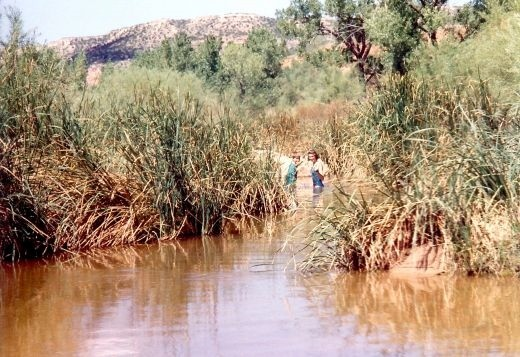 People cooling off in the water in Palo Duro Canyon.