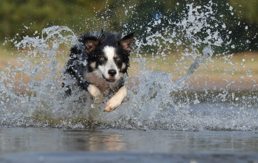 High-energy dogs need high-energy owners.