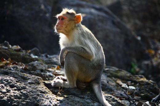 Monkey in SGNP