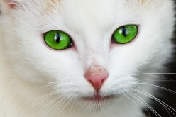 Eyes of green