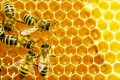 How do bees Determine their Fate? Queen Bee vs. Worker Bee