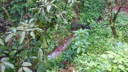 Flora of Matheran