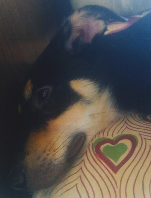 My pup Murphy