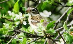 Best Monocular for Birding for the Money