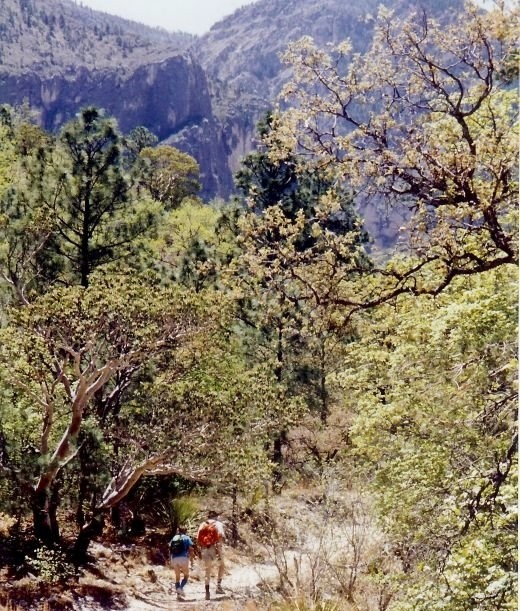 Hiking into McKittrick Canyon within the Guadalupe Mountains National Park