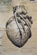 Leonardo Da Vinci: Master Scientist