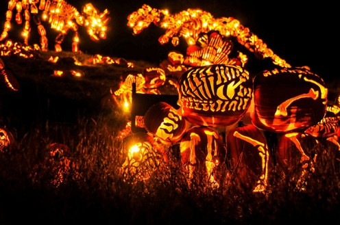 """Exciting display at the """"Great Jack-o'-Lantern Blaze."""""""