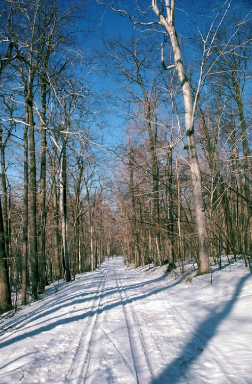 Cross country-skiing trail, Mont-Saint-Bruno National Park, (Quebec)