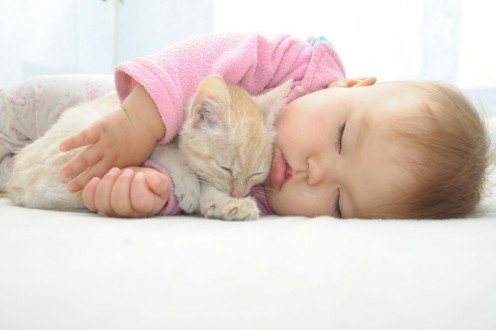 A kitten can help your baby fall asleep so much faster.