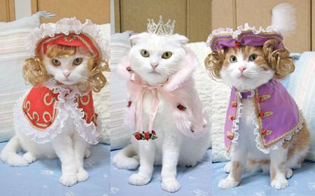 If you have several beautiful cats, dressing them up will be lots more fun (for you).
