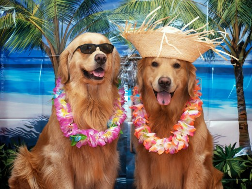 Hawaii is one of a dog's favorite vacation spots.