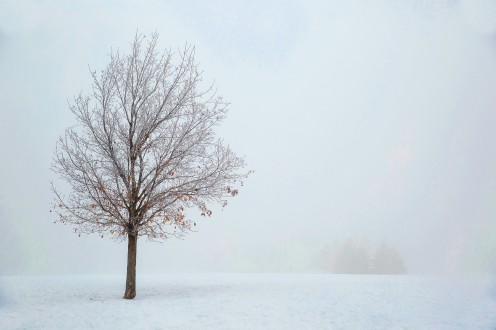 This photo of the barren tree in the snow symbolizes the band's song Falling Snow. Heavy snowfall can impact our lives even if it is beautiful.
