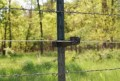 Proper Fencing for Your Farm Animals