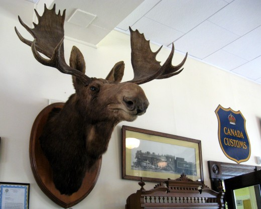 A moose head on the wall in the rail station.