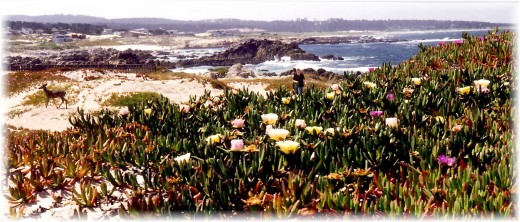 Note the deer- 17 Mile Drive scenery along the Pacific in California