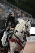 Arabians Electrify the Arena at the Central Park Horse Show