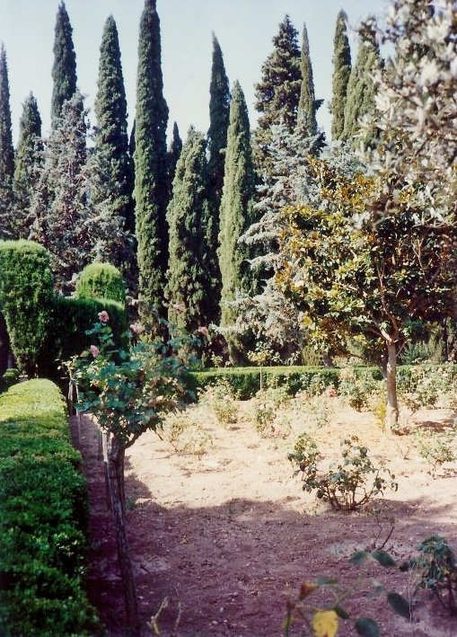 Rose bushes serve as markers for the monks in the cemetery